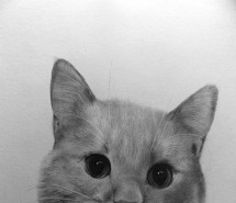 81 Spectacular Pencil Drawing